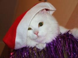 Новый кот 2011!