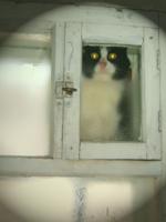 Новый Кот в окно стучится!