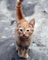 Котенок по имени Изюм