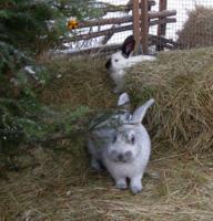 Елочка для кроликов