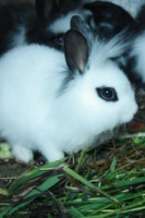 Кроличек