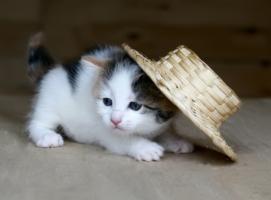 Упала шляпа :)