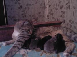 маруся и котятки