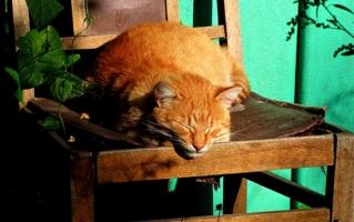 Время рыжих котов