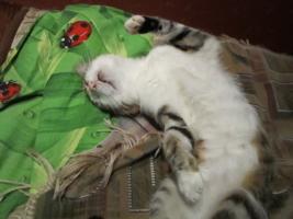 антоха спит