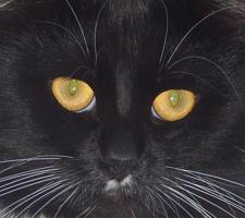 Посмотри мне в глаза...