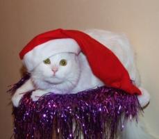Год белого кота 2011 !