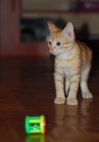 Поиграйте со мной....