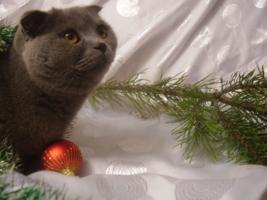 Где же мой подарок?