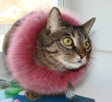 Котька - модник