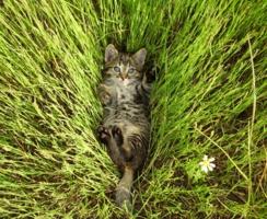 Чудо в траве