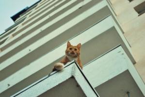 на крыше дома моего