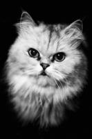 Барышня-кошка