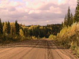 листопад на дороге