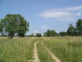 Дорога в деревушку.
