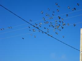Счастие птичие