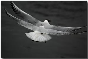 И найдут они счастие птичие