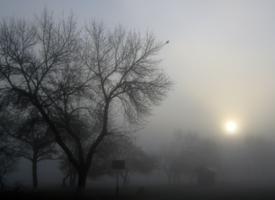 туман на рассвете