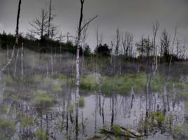 В заколдованных болотах