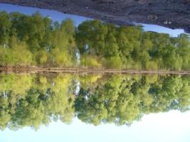 Отражение река