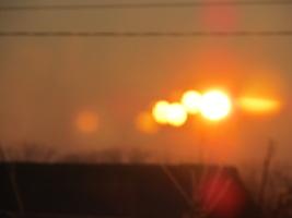 размножение солнца