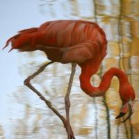 Зеркалирование фламинго