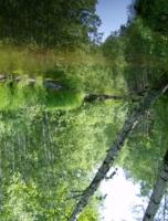 отражение в воде таежного озера