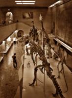 Палеонтологический