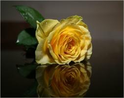 Одинокая роза...