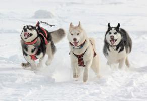 Снежные Игры
