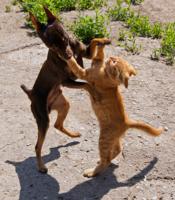 Этот дивный танец ВАЛЬС...