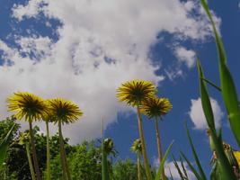 Муравьиная Весна