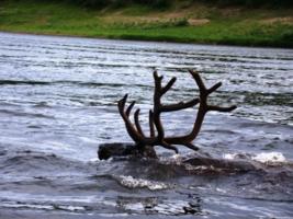 Против течения могучей реки