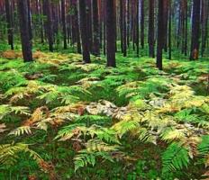 А лес стоит загадочный...