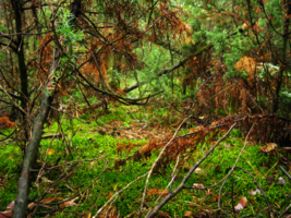 сказочный лес...