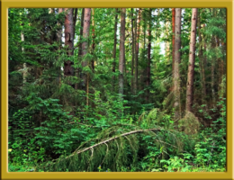 Во лесу ли, во бору ли, ...