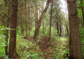 Добрый лес