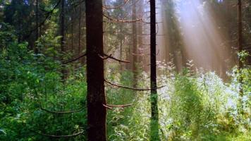 Туманное утро в лесу.