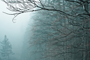 А лес стоял загадочный...