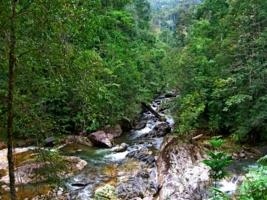 Пхукетский лес