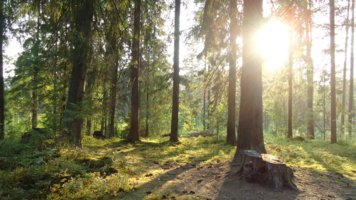 Солнечный лес.