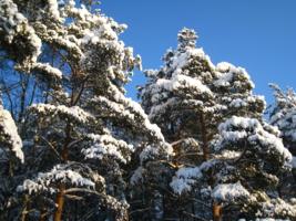 Снежные стражи-богатыри