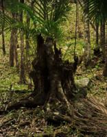 В тропическом лесу...
