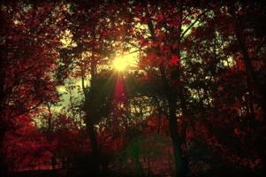 Багровый октябрь