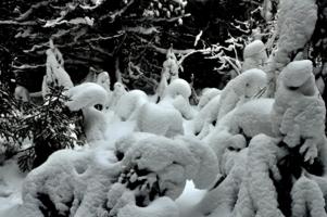 Зимний сон в лесной чаще