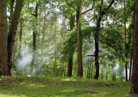 На краю леса