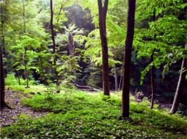 В гуще леса