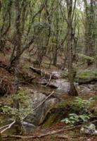 Река в дремучем лесу