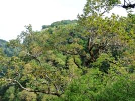 лес Кавказа