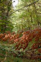Лесной шлагбаум